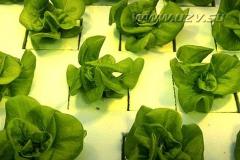 salat4_20